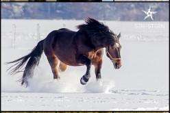 Pferdefotograf in München