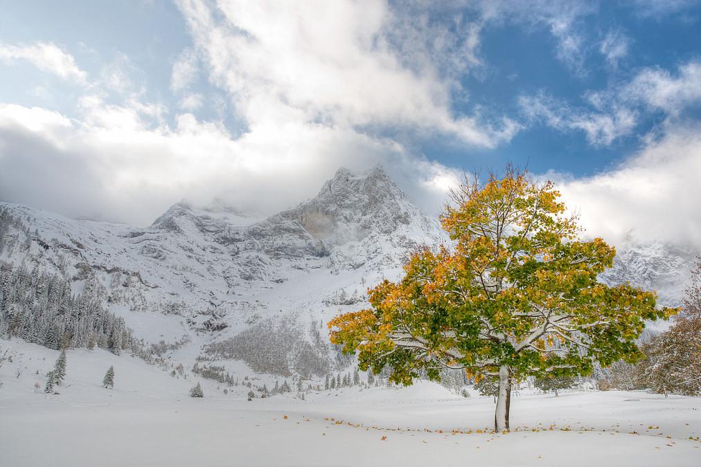 Ahornboden mit buntem Laubbaum im Schnee